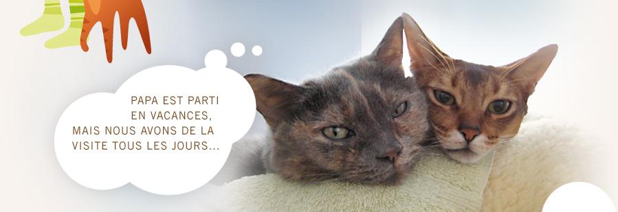 chat heureux choisir la garde de chat domicile paris. Black Bedroom Furniture Sets. Home Design Ideas
